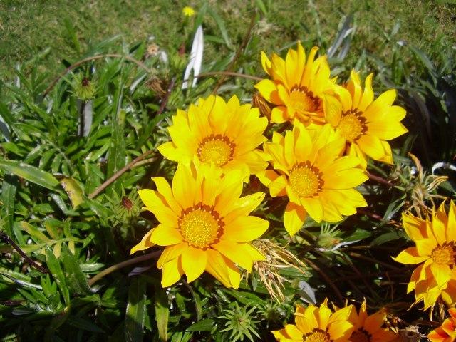 spring-reggatta-tripoli