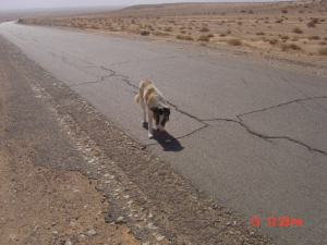On the roads to Southern Libya