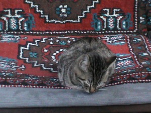 Peaceful cat in Cafe in Sogukcesme street, Sultanahmet-Istanbul