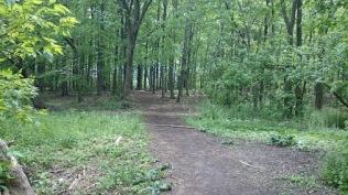 Community-FM Woods