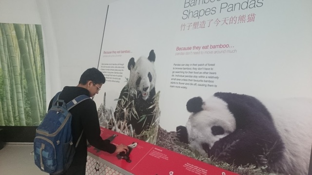 2015-Zoo-Giant Pandas